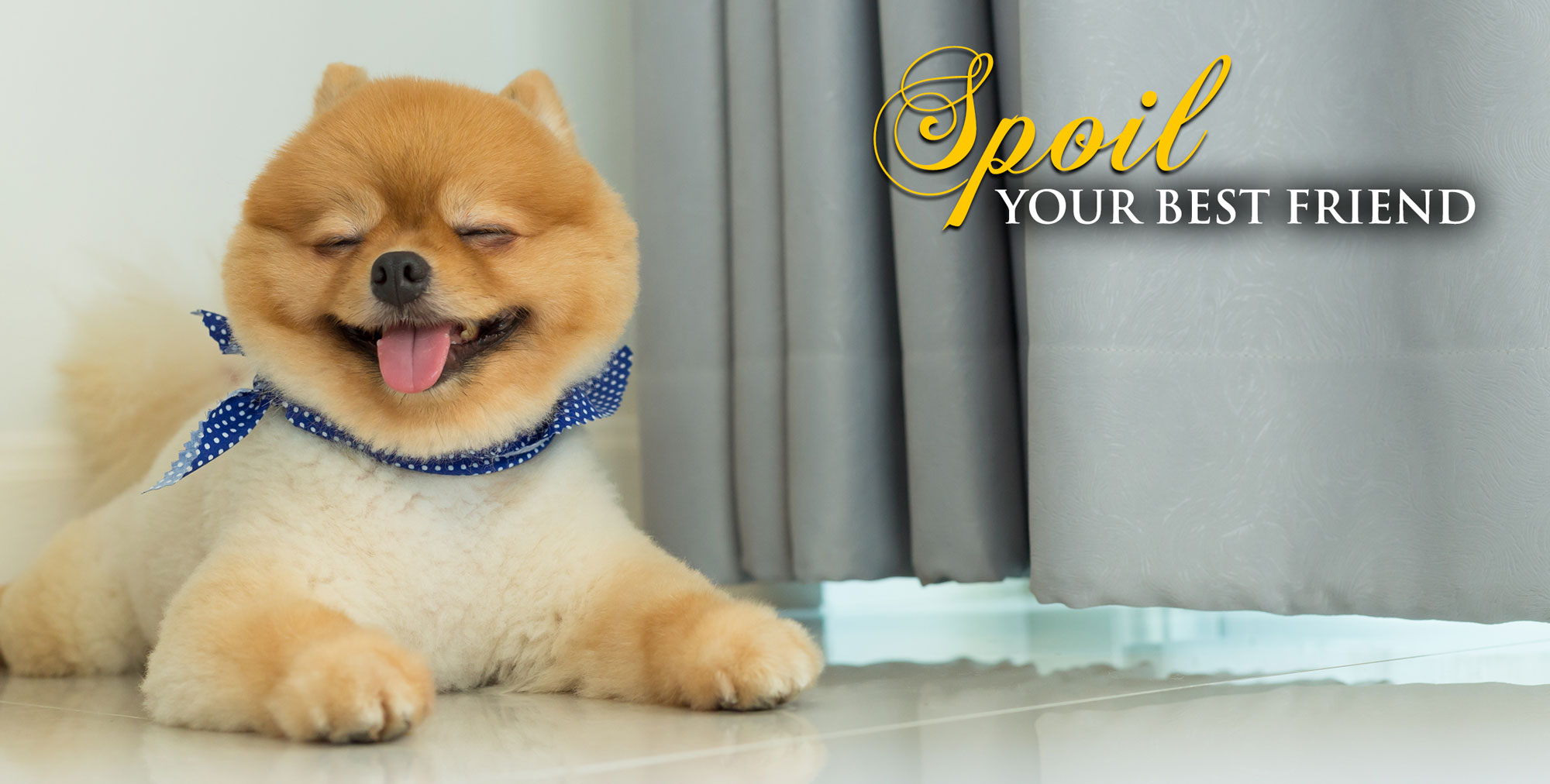Dog Groomers Mornington | Dog Grooming Mornington | Dashing Designer Dogs Mornington | Dog grooming | Doggy Day Care | Dog Walking | Dog Groomers Mornington Peninsula