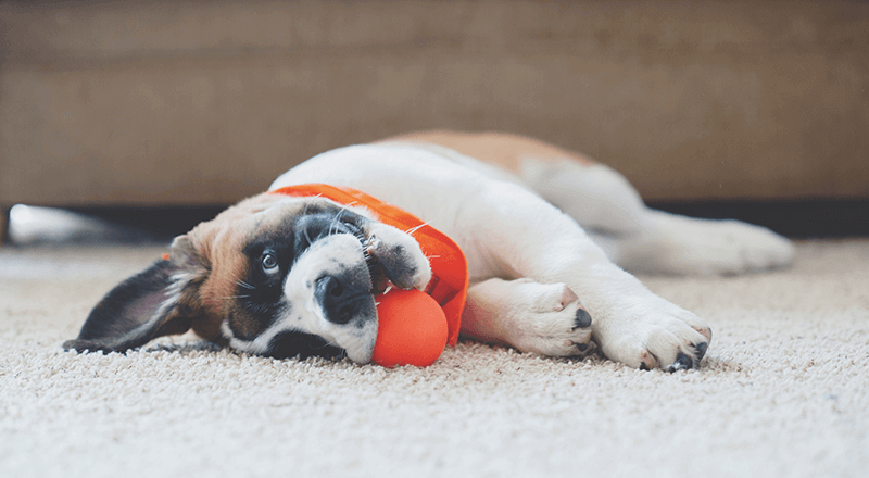 Top 5 Things To Do With Your Dog While Self-Isolating